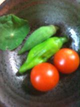 2010.7.27収穫分.jpg